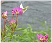 25th Sep 2012 - Flowers And Butterfly
