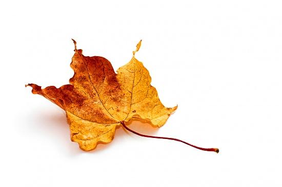 Leaf by humphreyhippo