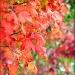 Fall Foliage by paintdipper
