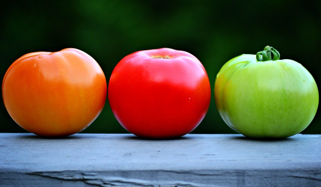 Three stages of tomatoes... by soboy5