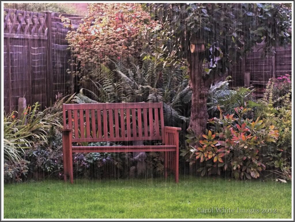 My Garden In The Rain by carolmw
