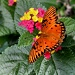 Lantana Lovely by cjwhite