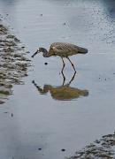 29th Sep 2012 - Heron and fish