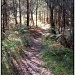 Tunstall Woods by judithdeacon