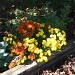 Fall flower and fallen leaves by bruni