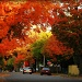 A glance down the street in October by pfmandeville