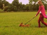 2nd Oct 2012 - Walking the Muttlies