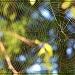 Cobweb Kaleidoscope (SOOC) by cindymc