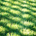 Grass shadow by kwind