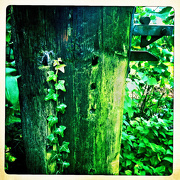 5th Oct 2012 - hipsta greens
