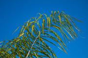 2nd Oct 2012 - palm blue