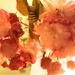 Think Pink! by maggiemae