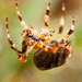 spider by peadar