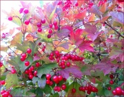 7th Oct 2012 - Season of mists and mellow fruitfulness