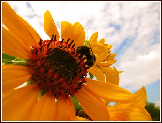 Honeybee camouflage by allie912