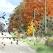 Blackbirds galore by bruni