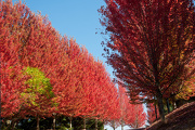 8th Oct 2012 - Fall Colors