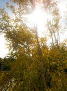 9th Oct 2012 - autumn flare