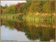11th Oct 2012 - Reflections Of Autumn 2