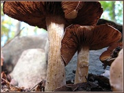 12th Oct 2012 - In the Mushroom Forest