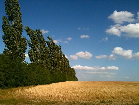 Wind In The Poplars by helenmoss