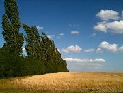 15th Jul 2010 - Wind In The Poplars