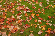 13th Oct 2012 - Leaves On the Grass