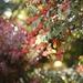 Autumn bokeh by parisouailleurs