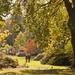 Walking in Autumn by dulciknit