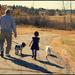 Dog Walk by kph129