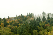 15th Oct 2012 - Fall Comes to the Hillside