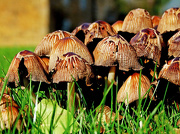 16th Oct 2012 - toadstools