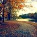 autumn path by edie