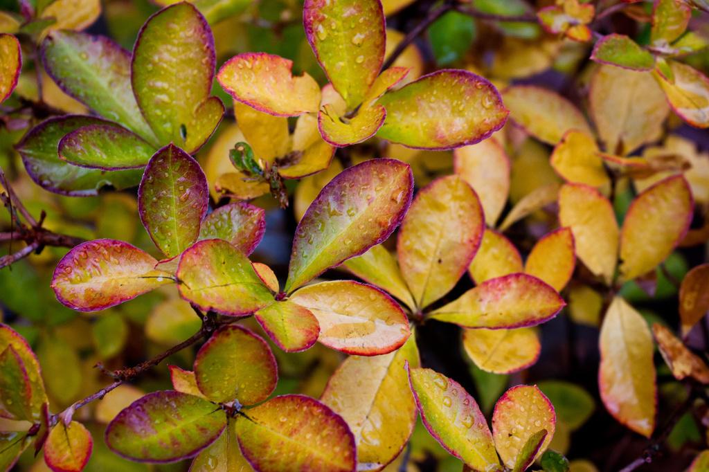 Wet leaves by kiwichick