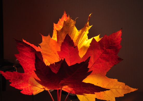 Leaf Bouquet by jayberg