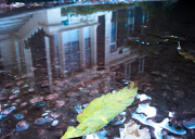 18th Oct 2012 - puddle reflection 1