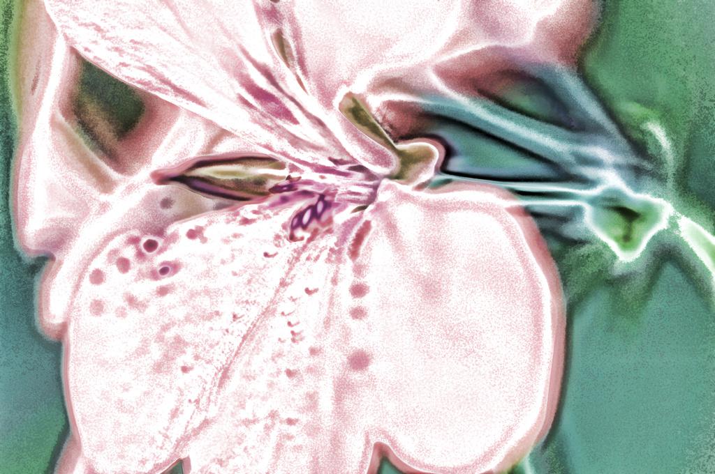 Georgia O'Keeffe Style Geranium by lstasel