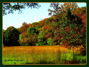 3rd Oct 2012 - Fall Colors