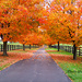 Fall in Kentucky by cindymc