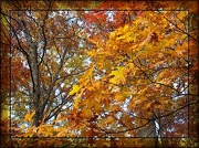 20th Oct 2012 - Autumn Glory