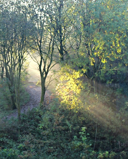 Autumn morning light by boogie