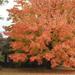 Autumn [SOOC] by rhoing