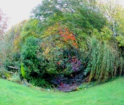 21st Oct 2012 - A Whirl of Autumn