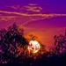 Sweet Sunset by corymbia