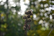 20th Oct 2012 - beauty fades