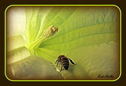 7th Oct 2012 - The world through a bee's eyes