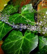 22nd Oct 2012 - WWW (Wet Wet Web)