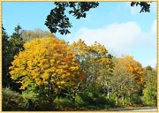 23rd Oct 2012 - Trees In Autumn