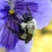Bumble Bee Sex II by sunnygreenwood