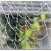 early morning mist = cobwebs! by judithdeacon
